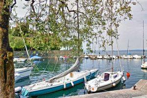 Olivi sul porto di Torri del Benaco